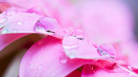 dew-drops-background