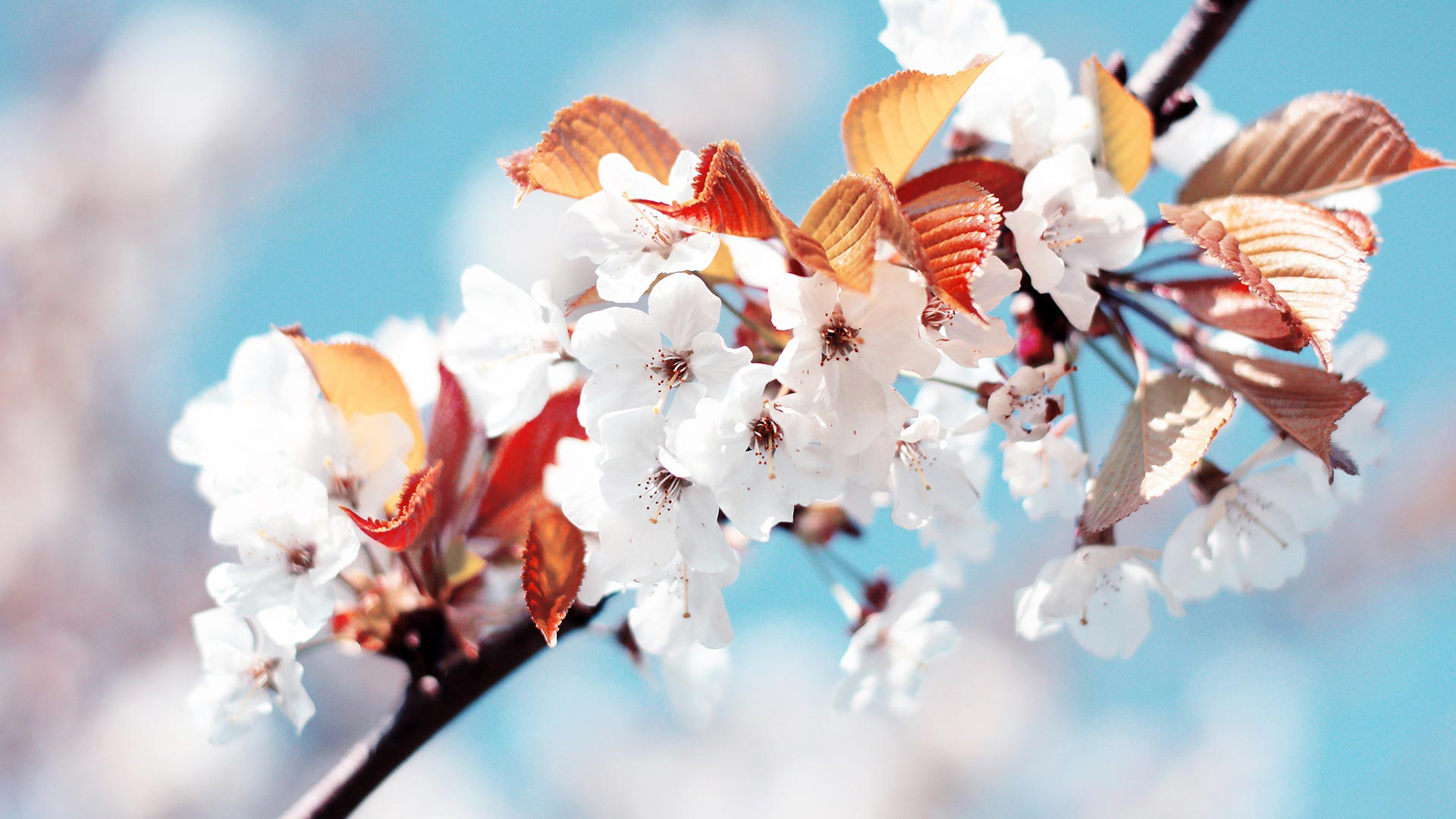 feat-spring-background-(6)
