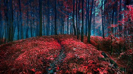 forest-floor-background