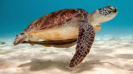 sea-turtle-background