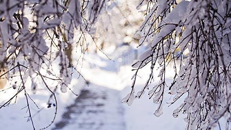 winter-background