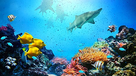 ocean-life-background
