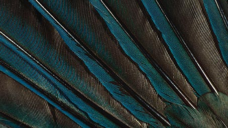 feather-background