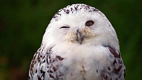 Owl Background on Windows 10 Color Scheme