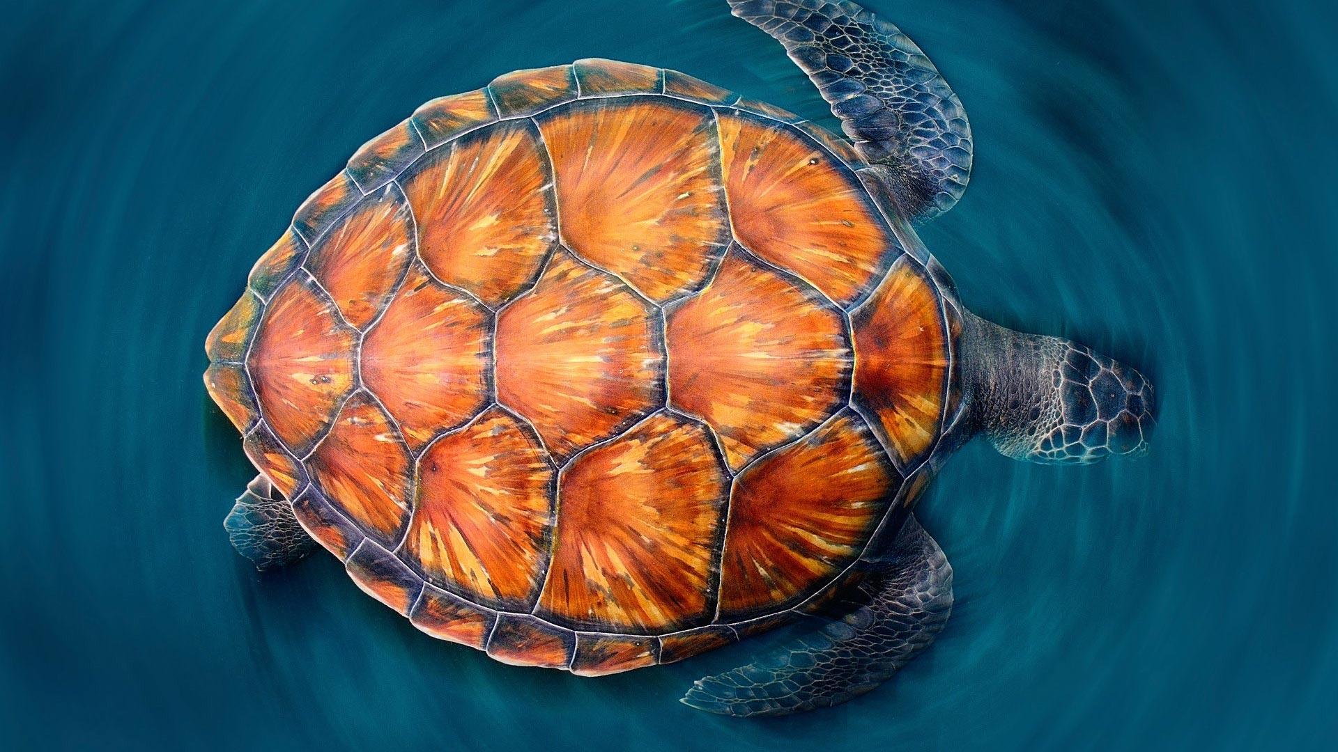 sea turtles theme for windows 10
